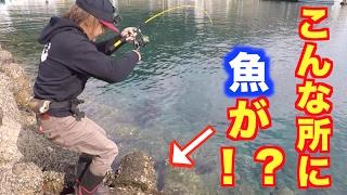 ケンサキイカ釣りしてたらまさかの奴が釣れた!穴釣りもしたよ! thumbnail