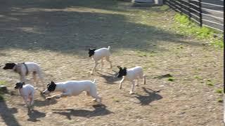 萩野スーパーミニ犬舎の中嶋さんのお声掛けで集まりました。 皆楽しそう...