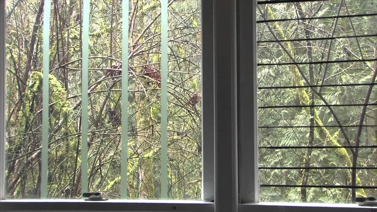 Birds Striking Building Windows Final YouTube - Window stickers to deter birdsstickers to prevent birds flying into windows popular bird