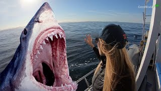 SEEKING GREAT WHITE SHARKS IN SOUTH AFRICA