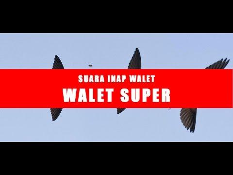 WALET SUPER | SUARA INAP WALET CEPAT MENGINAP 2017 - FULL AUDIO HQ