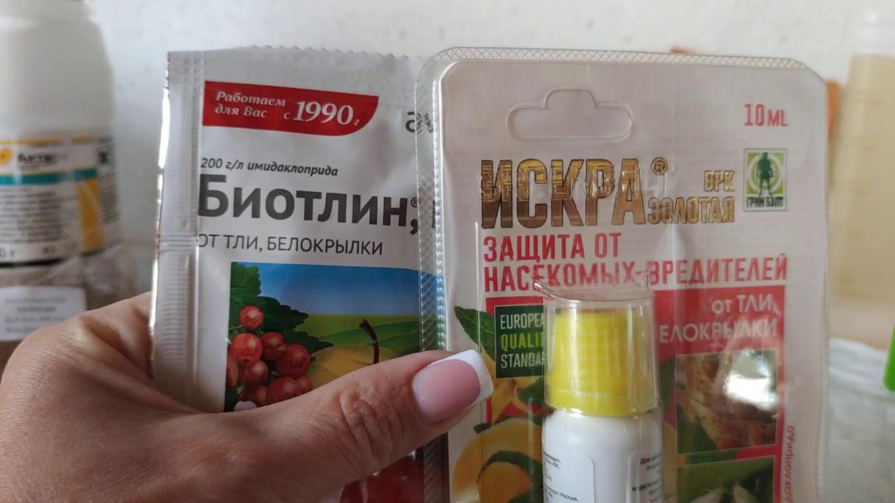 Розы в Подмосковье. Препараты от вредителей, которыми пользуюсь я.