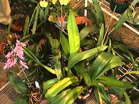 Master Gardening:  Orchids