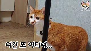 두 번째 이사, 어리둥절한 고양이와 혼자 자기 싫은 인…