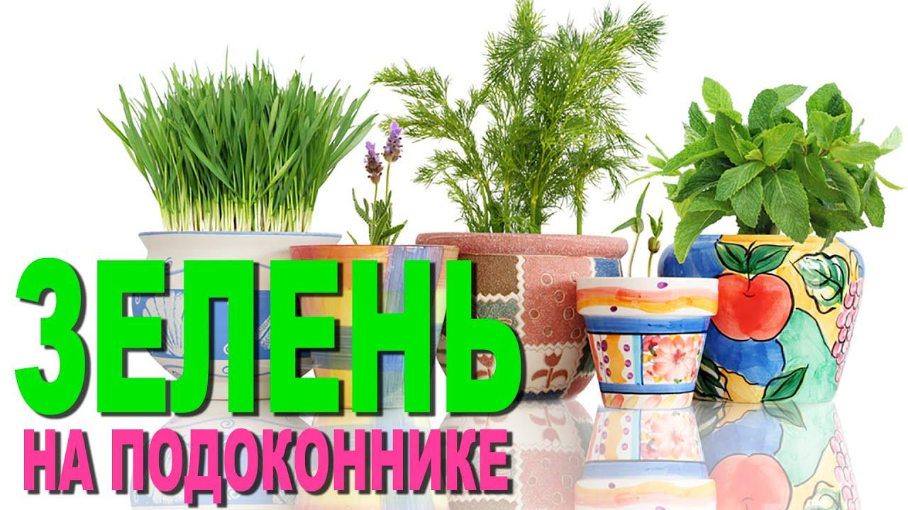 Купить зелень и салаты с доставкой на дом по санкт-петербургу и ленинградской области в онлайн гипермаркете низких цен салатница.