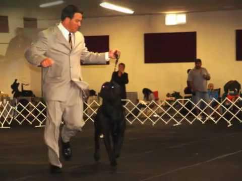cane-corso-national-speciality-show-s.a.c.c.i.-2009-judge-m.inzoli