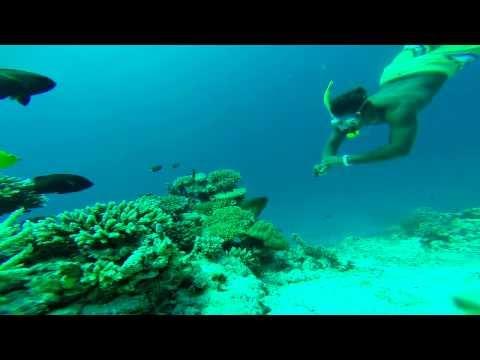 Morena fish wildlife  - Muraena fish wildlife - Maldives.Discover real  Maldives.Free Diving.
