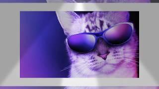 Кот в очках на вечеринке