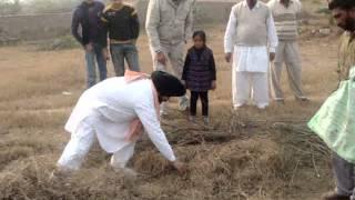 catching snake videos by vaid gurbachan singh/con-no 98141-93242