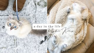What It's REALLY Like Having A RAGDOLL KITTEN! (Full Day In The Life)