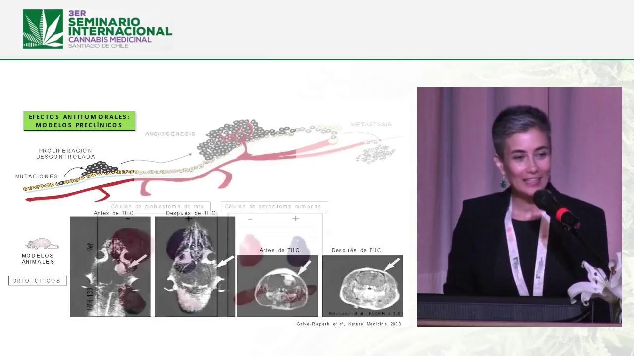 CBD Info : Prezentare  a Dra. Cristina Sánchez - Seminar Cannabis Medical din Santiago de Chile - Sp