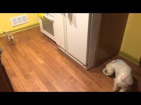 Dog Refuses To Eat Alone & Finds A Great Way Out