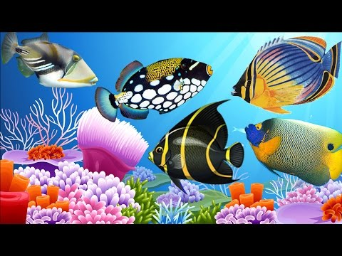 Learn Fish Names For Children - Top Fish Beauty World - Learn The Underwater Animals