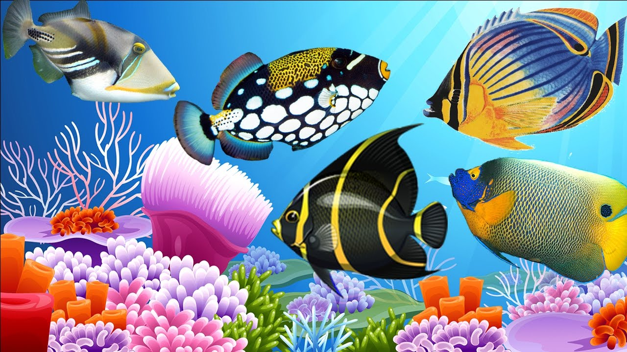 learn fish names for children top fish beauty world learn the