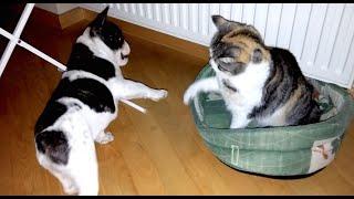 Pixel vs Cat  Third Epic Battle For Bed