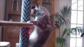 Смешные кошки, прикольные котята - улетное видео и подборка 2014!!