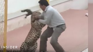 Leopard attacked a school in India