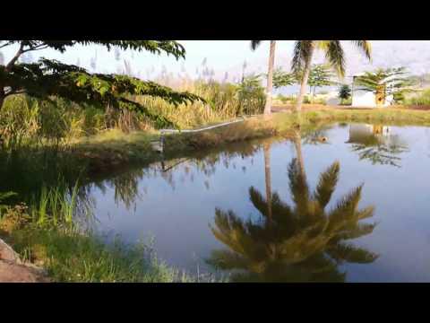 How to start tilapia fish farming -Tamilnadu (Gift Tilapia)