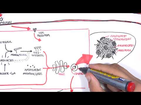 Physiology of Lipoproteins Cholesterol
