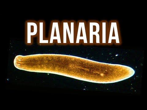 How To Get Rid Of Planaria – 4 Proven Methods