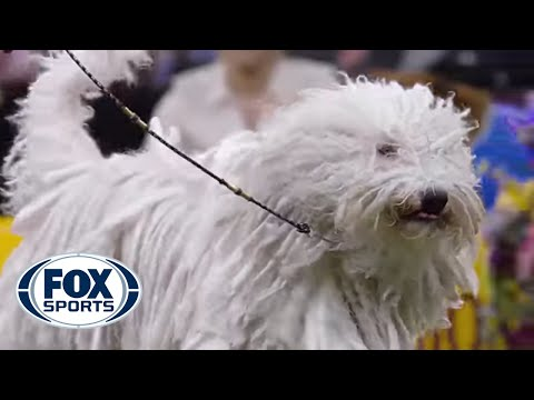 Meet the Working Group | WESTMINSTER DOG SHOW