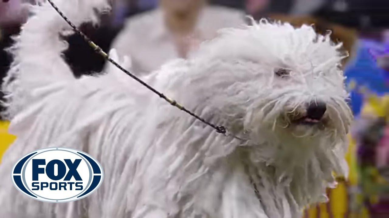 Meet the Working Group | WESTMINSTER DOG SHOW (2018) | FOX SPORTS