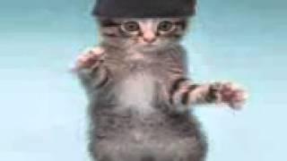 Tańczący koty