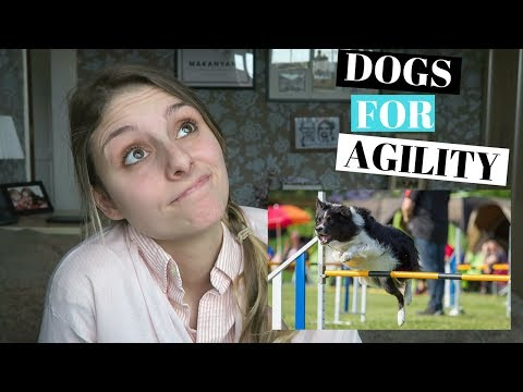 BEST DOGS FOR AGILITY