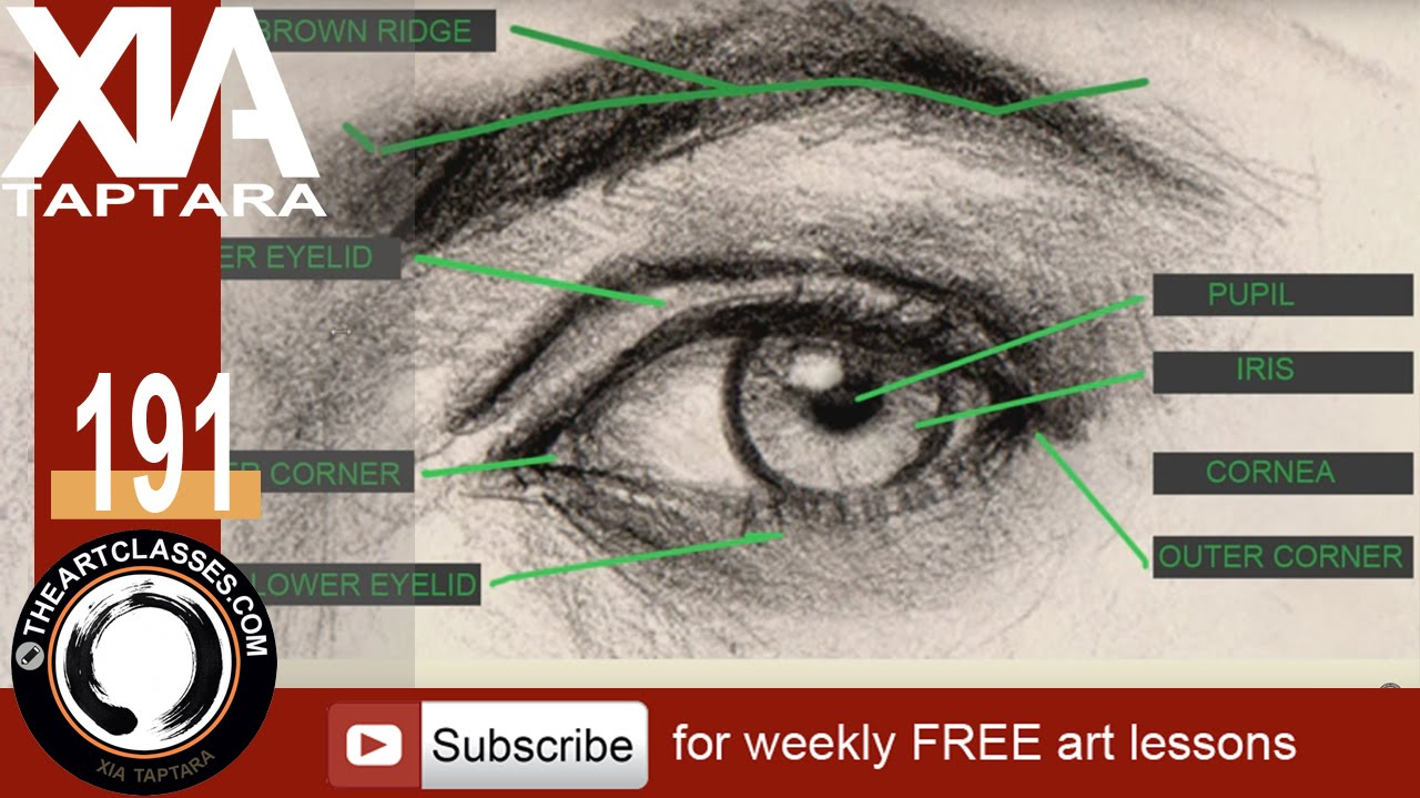 How to draw eyes structure and anatomy - YouTube