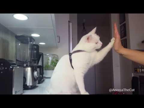 CUTE CAT TRICKS BY ANISSA | Anissa temppuilee