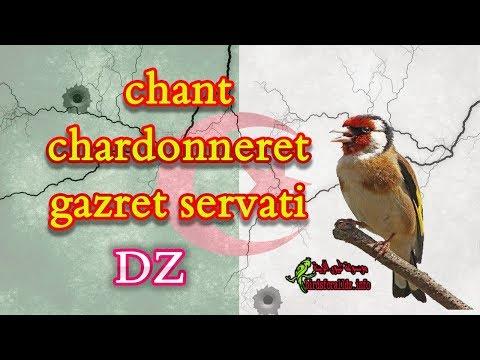 CHANT CHARDONNERET ELEGANT MP3