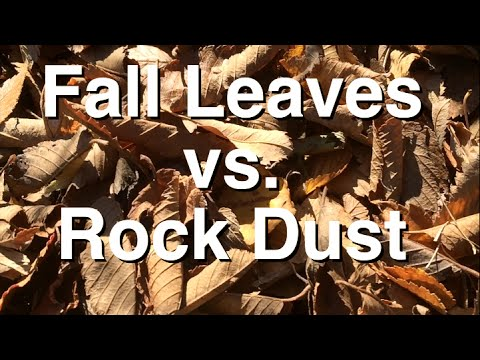 Autumn Leaves vs Rock Dust: Mineral by Mineral Comparison