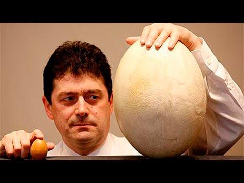 Что появилось раньше — курица или яйцо?