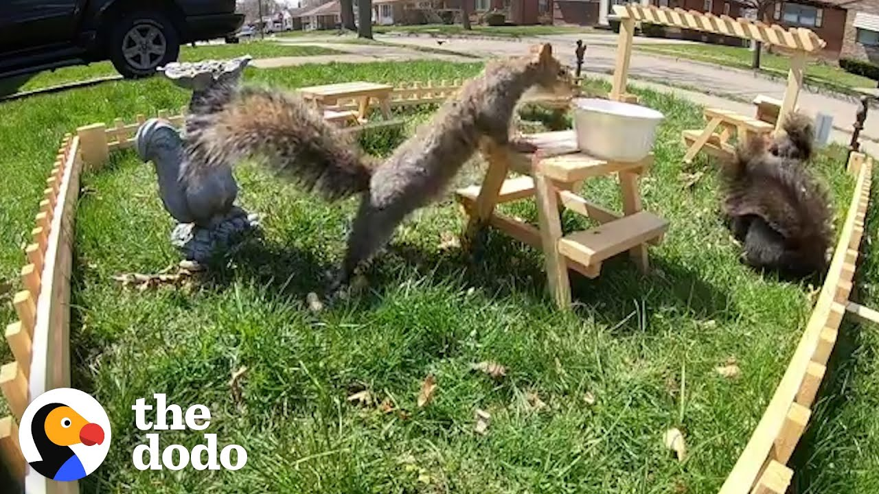 Guy Builds Tiny Restaurant for Neighborhood Wildlife...See What Happens Next | The Dodo