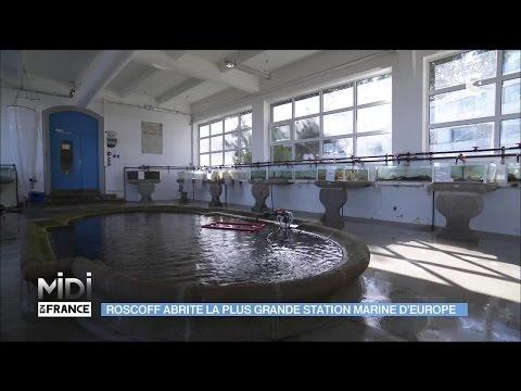 Dans le finistère, Roscoff abrite la plus grande station marine d'Europe