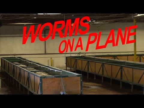 Charlotte, NC Airport Worm Farm, Composting, Recycling Center Auction Preview