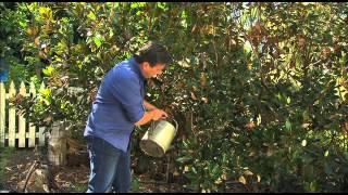 The Garden Gurus - Seasol-Does it work?