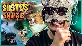 Os Sustos Mais Animais Do Youtube 🙀