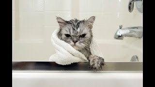 It's Time to LAUGH - Pets Just HATE Taking a BATH