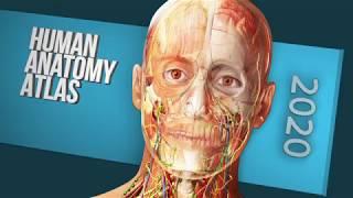 What's in Atlas 2020 Site License?   Human Anatomy Atlas