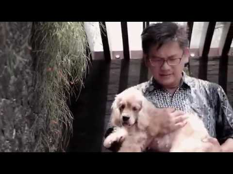 Happy Pets Dog And Cat Grooming Indonesia | Best Mobile Grooming In Indonesia