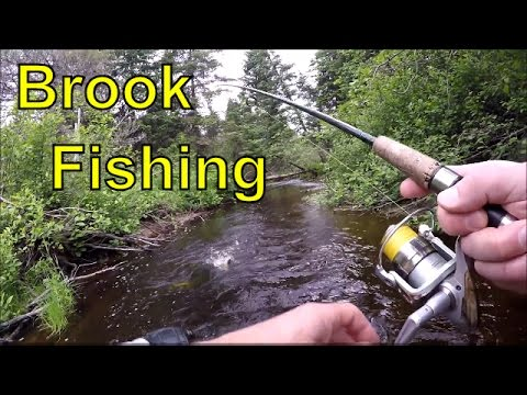 Deep Woods Fishing For Brook Trout New Brunswick Canada-Underwater Views