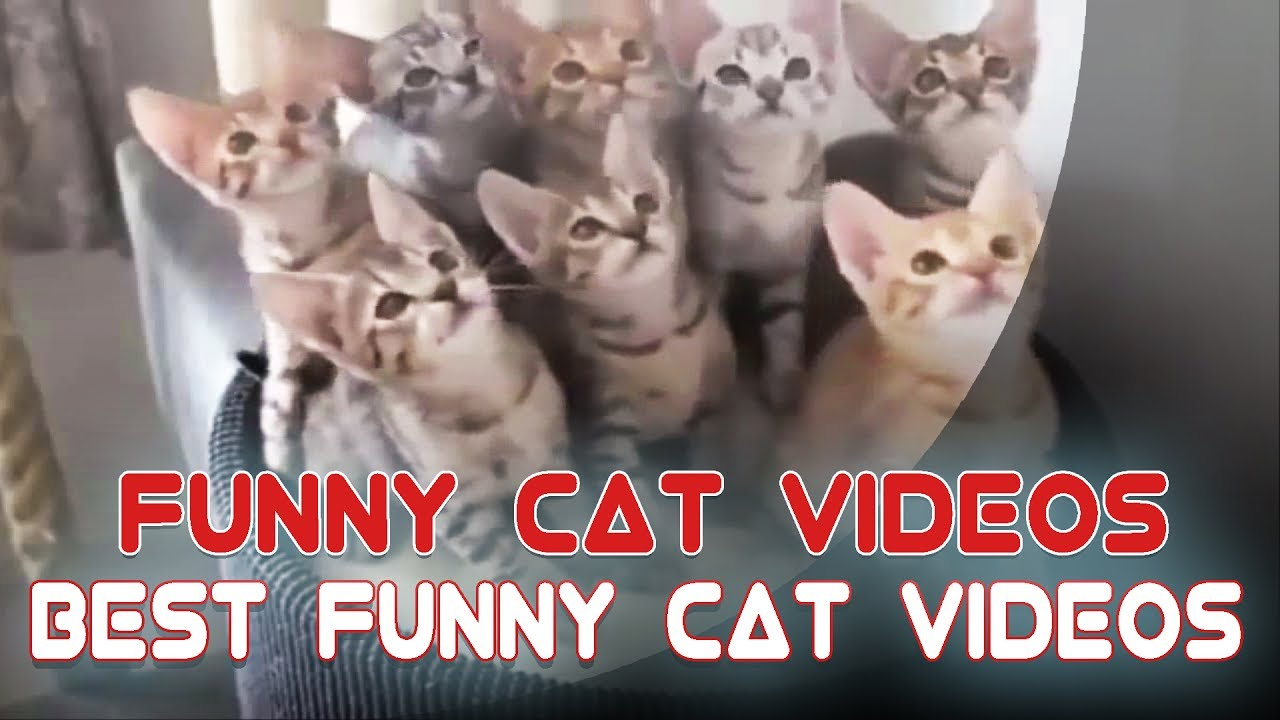 Funny Cat Videos | Funny Cat Videos Compilation | Funniest ... Funny Cat Videos Youtube