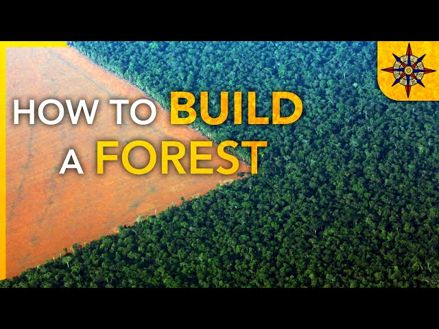 How to Build a Forest