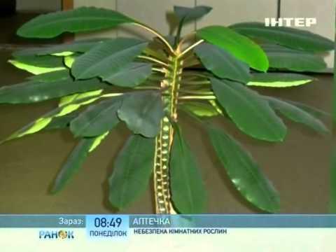 Подальше от окна теневыносливые растения Комнатные