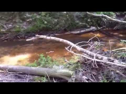 Eastern Diamondback rattlesnake encounter hiking Eagle Jon