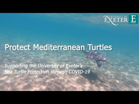 Protect Mediterranean Turtles: Supporting The University Of Exeter's Turtle Conservation In Cyprus