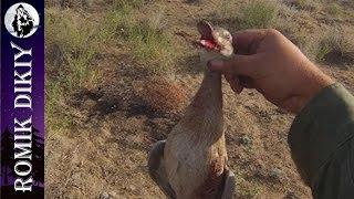 Охота на уток в сентябре видео