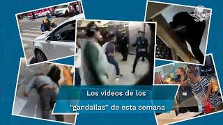 En video quedó registrado el momento en el que usuarios y policías se enfrentaron a golpes en la entrada de la estación Pantitlán de la Línea A del Sistema de Transporte Colectivo Metro; por esta razón EL UNIVERSAL te presenta a los gandallas de esta semana