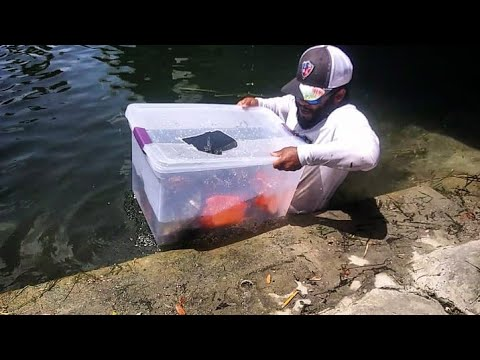 Plastic Bin Fish Trap Catches BIG FISH! DIY | Monster Mike Fishing